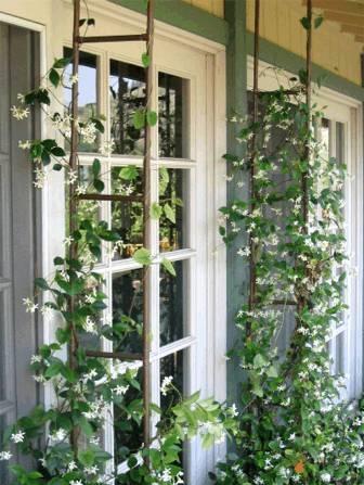 Вертикали вьющиеся растения в саду