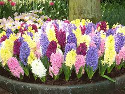 шикарные цветы для женщины фото